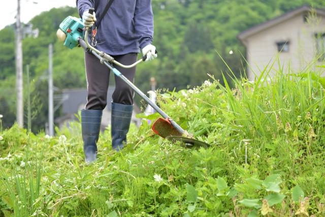 岩国市で草刈りに最適な年3回の時期~楽に草刈りを終えるコツまで徹底解説
